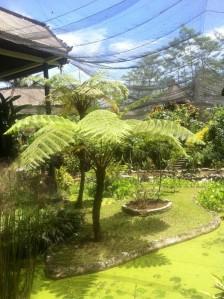 Baum in der Butterfly Farm auf Bali