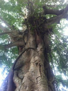 Baum auf Bali