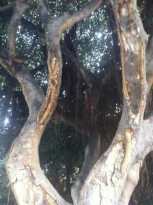 Baum in der Stadt Malaga