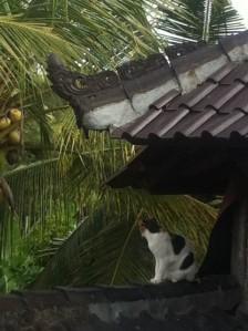 Katze in Bali